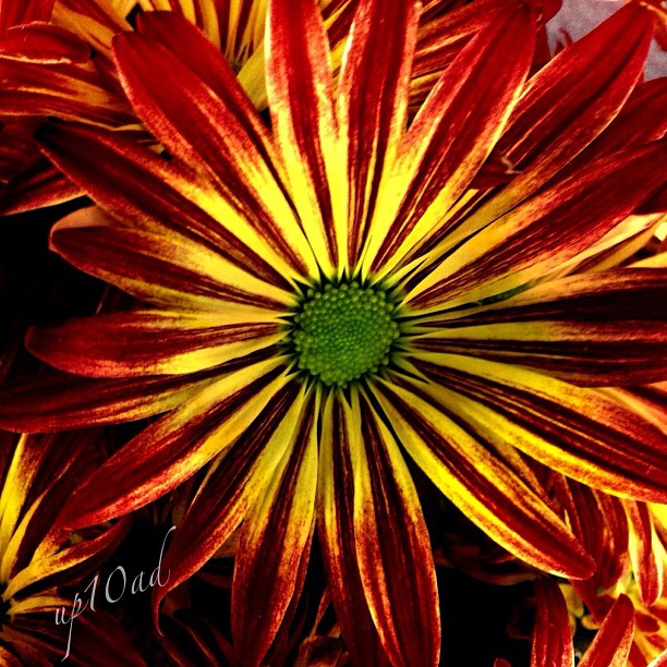 Walmart wallflower #flower