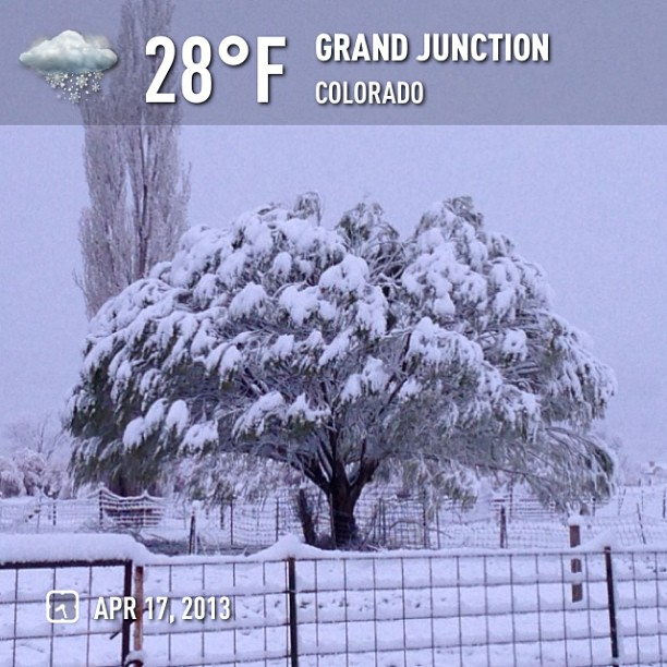 I'm done with snow in spring. #weather  #snow #instaweatherpro  #sky #grandjunction #spring #morning