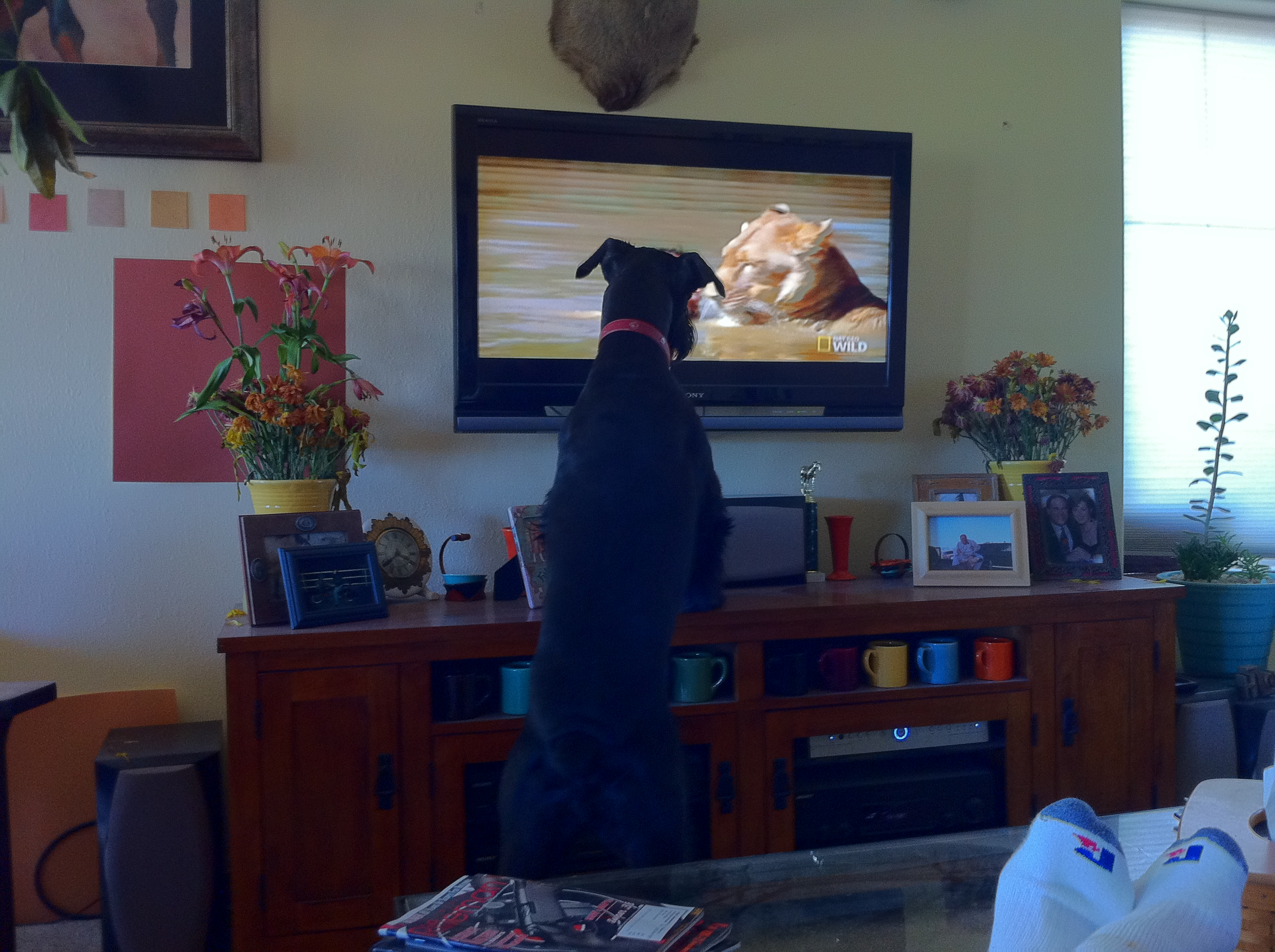 Bette discovered TV
